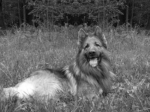 Stezkou vlka, Hamry u Svojanova